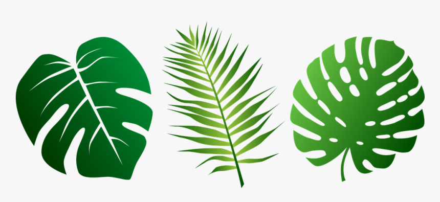 Jungle Leaves Clipart Hd Png Download Kindpng