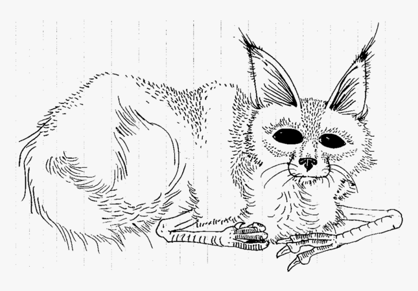 Wild Things Are Coloring Pages