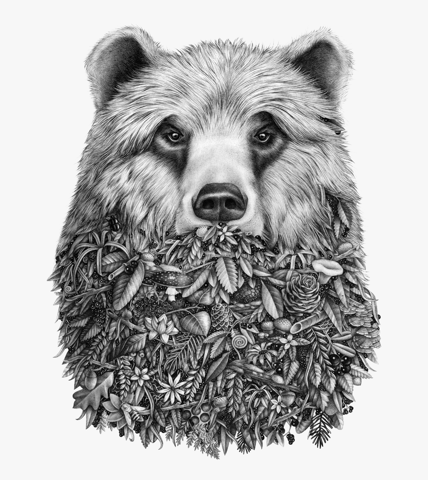 Grizzly Bear Png, Transparent Png, Free Download