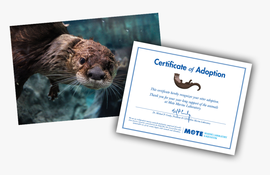 Items Included In E-pal Package - Sea Otter, HD Png Download, Free Download