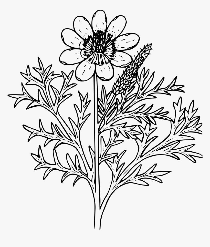 Wildflower Outline Png, Transparent Png, Free Download