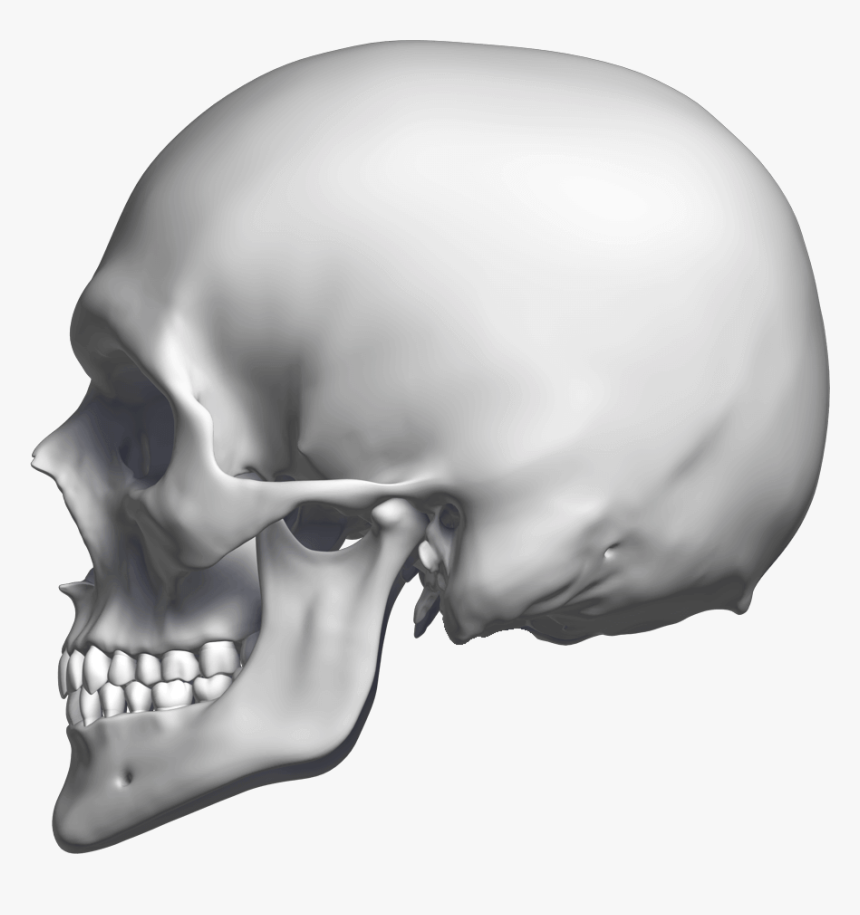 Skull , Png Download - Skull Sideways Png, Transparent Png, Free Download