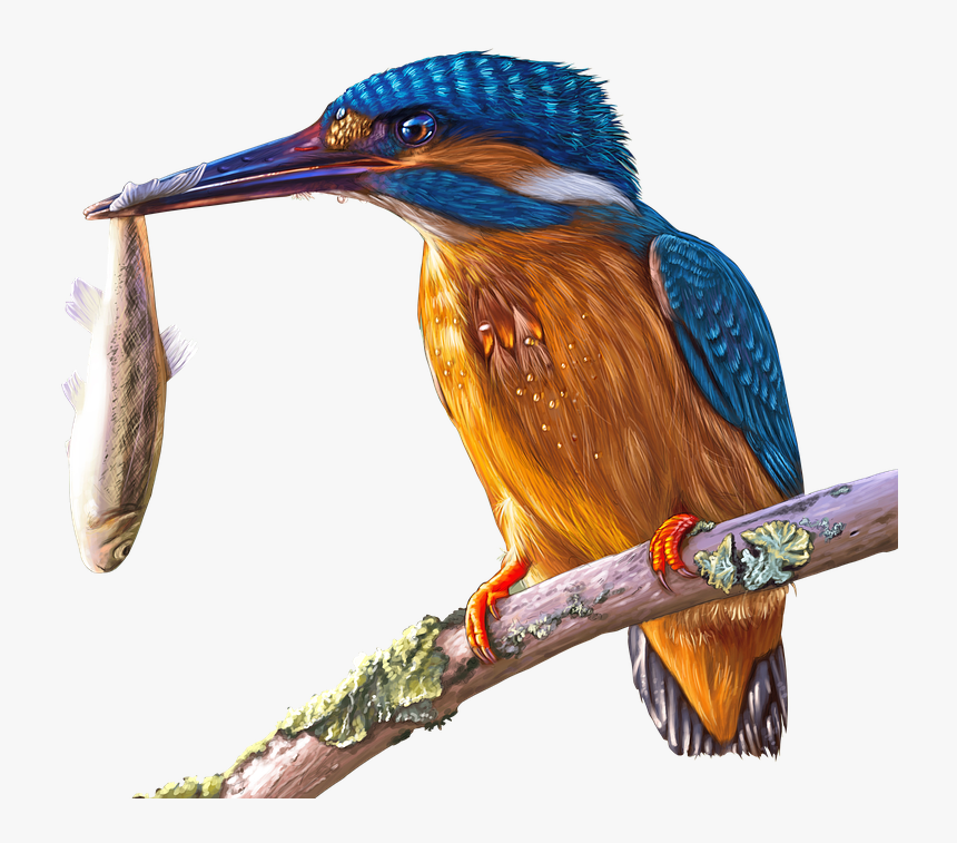 Painting, Kingfisher, Bird, Colorful, Painted, Bill - King Fisher Png, Transparent Png, Free Download