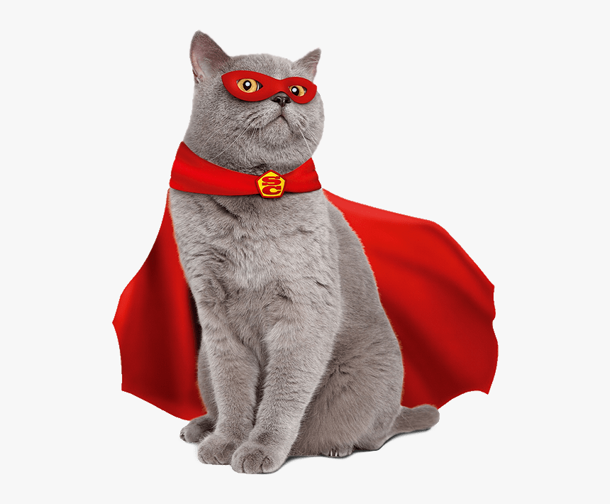 High Quality Super Cat Blank Meme Template, HD Png Download, Free Download