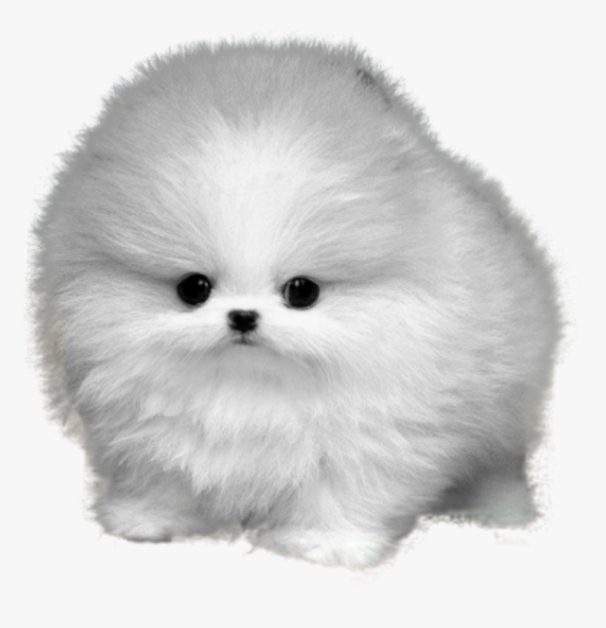 Dog Fluffy Puppy Baby Cute Cute Puppy Dogs Fluffy Hd Png Download Kindpng