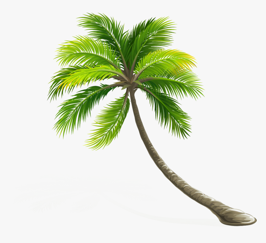 Arecaceae Coconut Leaf Tree Hd Image Free Png Clipart - Transparent Background Palm Tree Png, Png Download, Free Download
