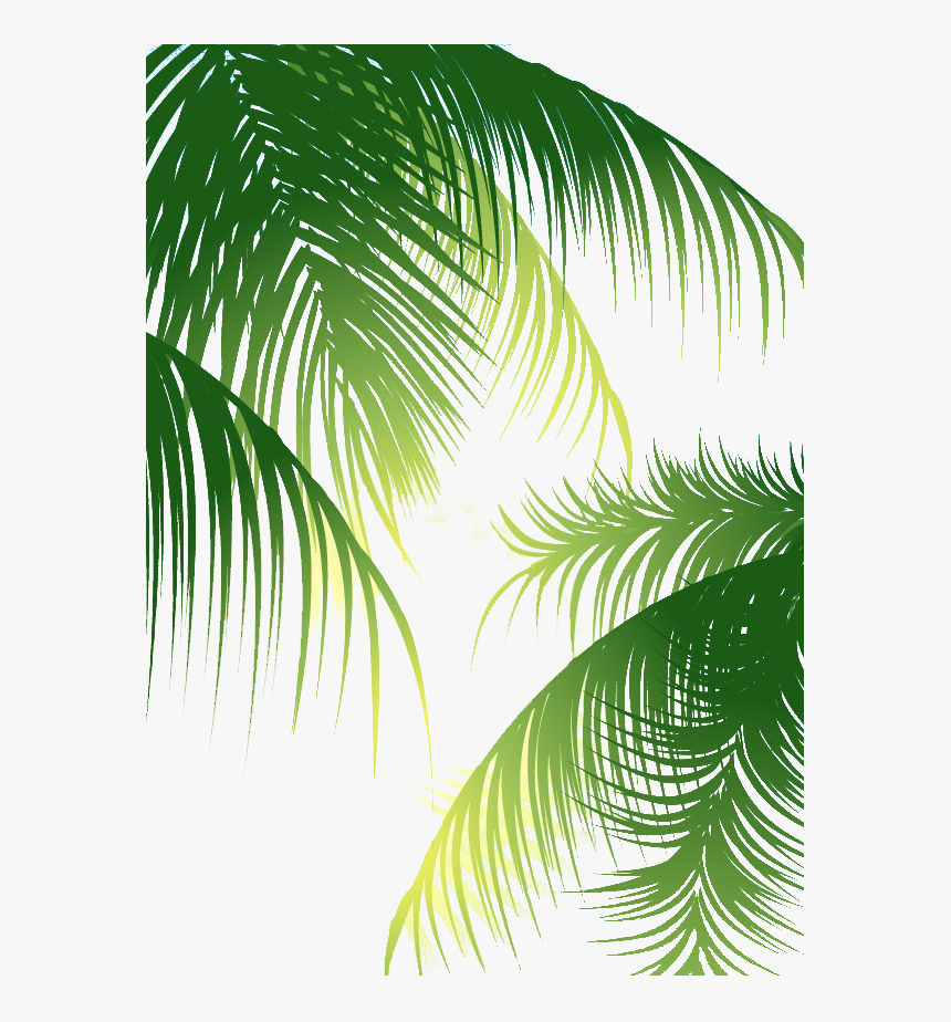 Coconut Arecaceae Euclidean Vector - Coconut Leaves Vector Png, Transparent Png, Free Download