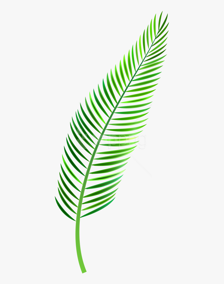 Coconut Leaves Png - Watercolor Palm Leaf Png, Transparent Png, Free Download