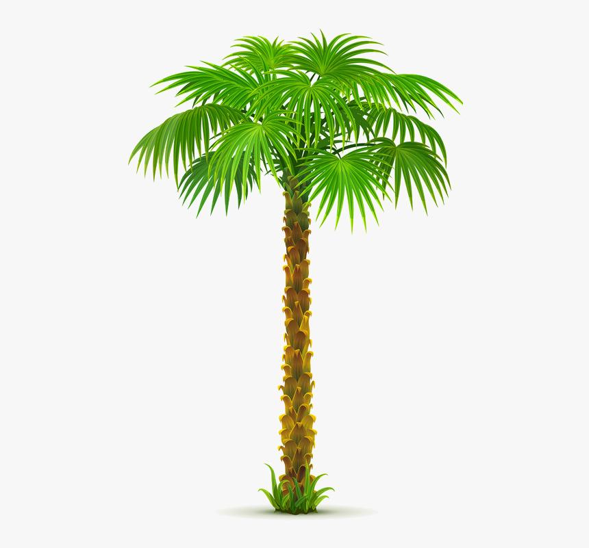 Arbre,png Garden Mural, Flower Clipart, Leaf Clipart, - Dates Tree Png Clipart, Transparent Png, Free Download
