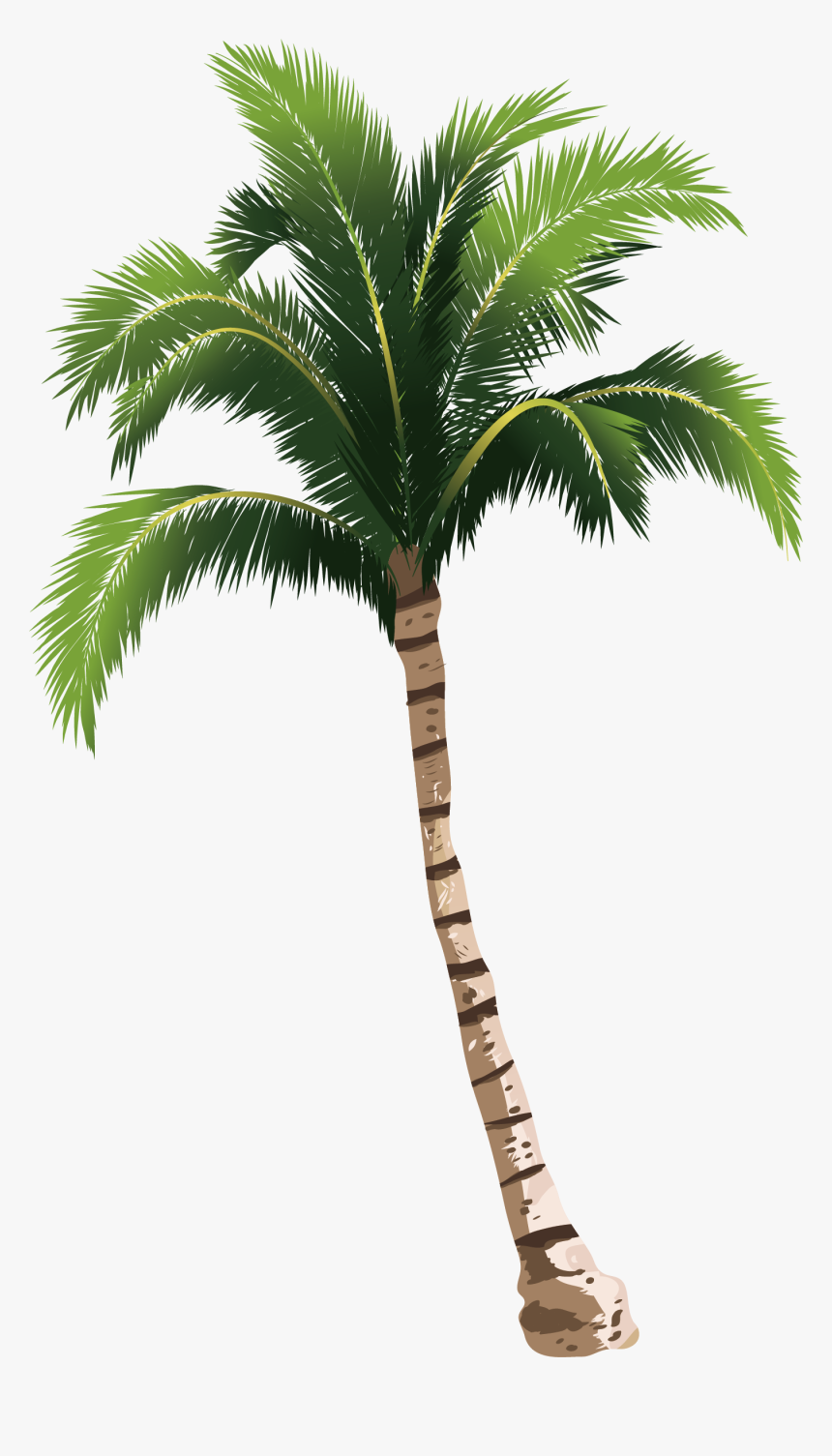 Coconut Tree Hq Image Free Png Clipart - Coconut Tree Png Free, Transparent Png, Free Download