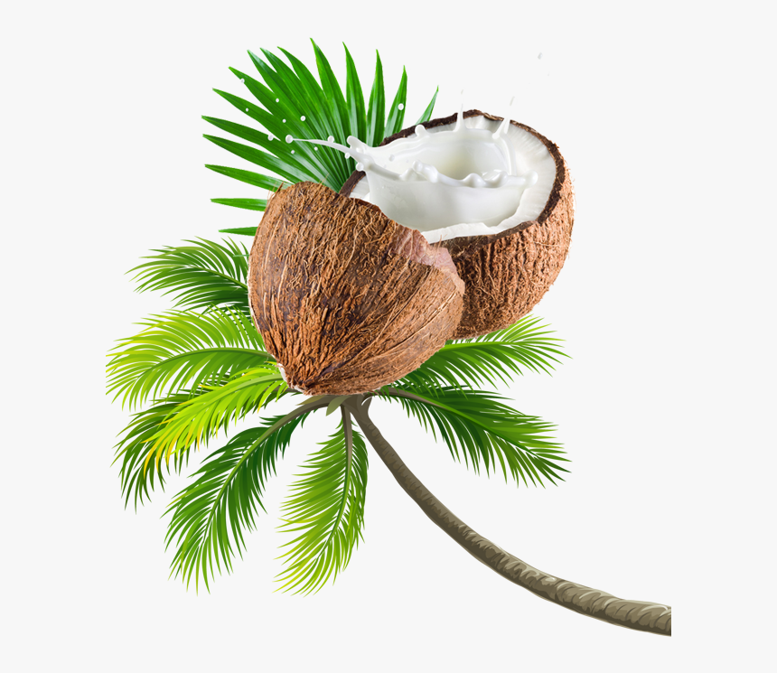 Coconut Tree Transparent Image - Beach Coconut Tree Png, Png Download, Free Download