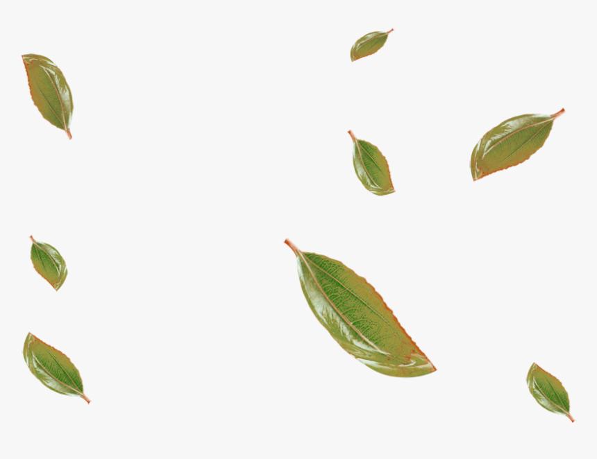 Leaf Clip Art - Clip Art, HD Png Download, Free Download