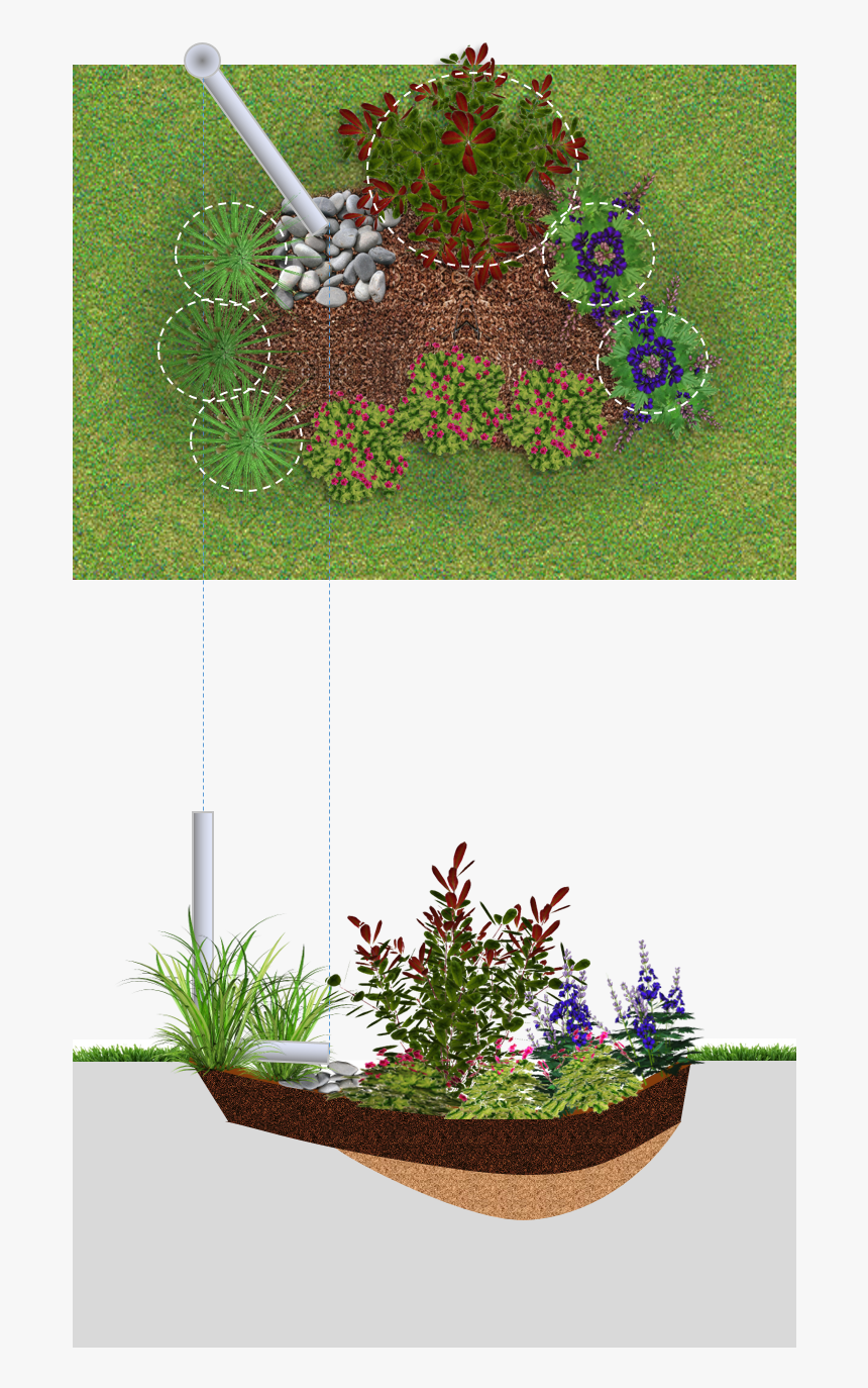Rain Garden Png, Transparent Png, Free Download