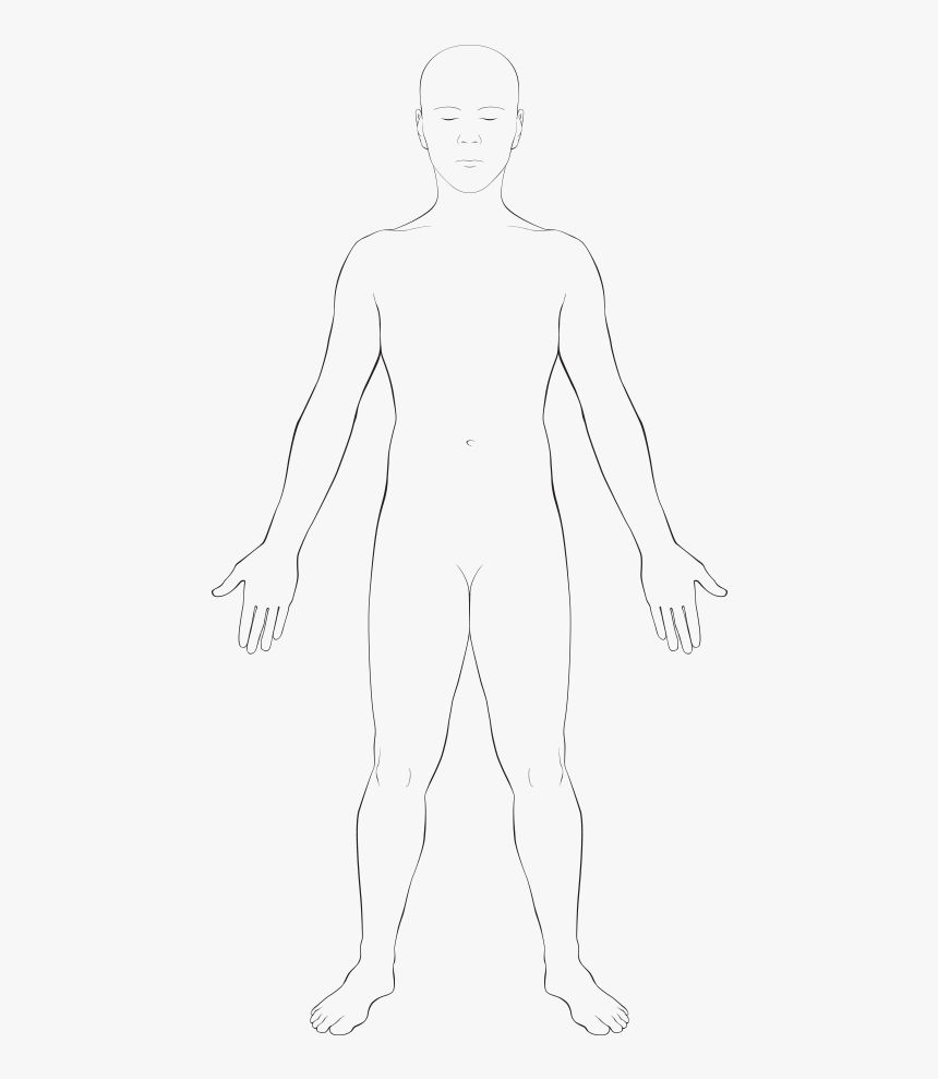 anatomy vector body outline physical body human body outline of body transparent hd png download kindpng anatomy vector body outline physical