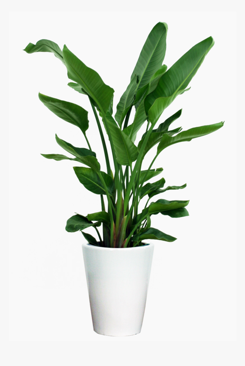 Transparent Potted Plants Png - Indoor Small Plant Png, Png Download, Free Download