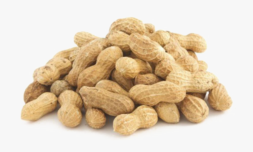 Peanut In Shell - Baits For Squirrels Hunting, HD Png Download, Free Download