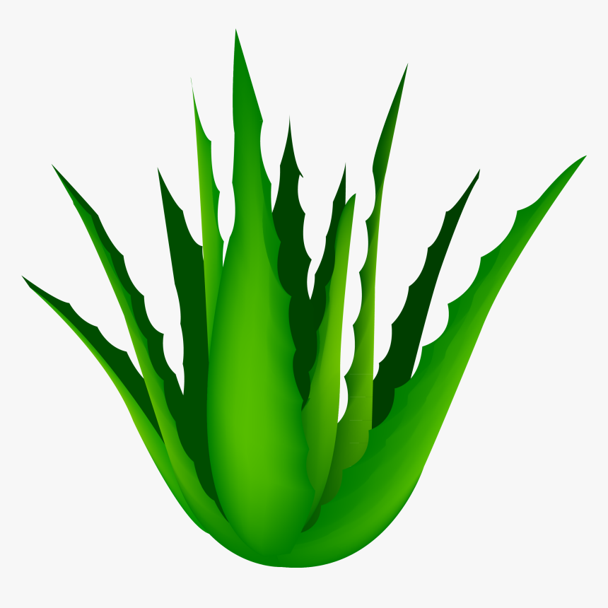 Clip Art Free Agave Vector Cartoon - Aloe Vera Transparent Background, HD Png Download, Free Download
