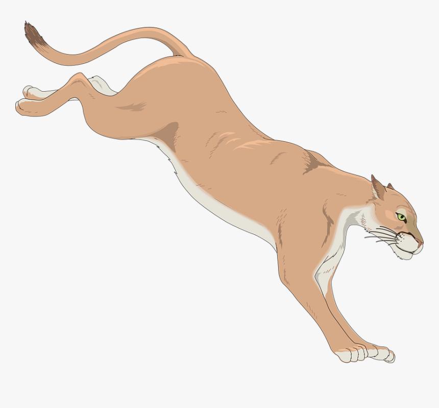 puma vector head - cougar clip art, hd png download - kindpng  kindpng