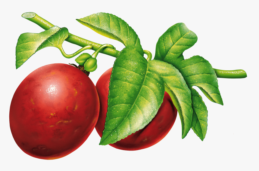 Vintage Plum - Fruits Vintage Png, Transparent Png, Free Download
