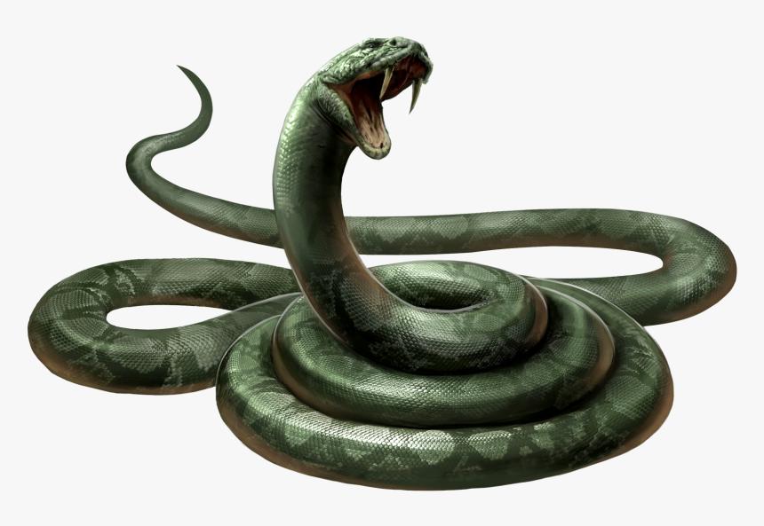 King Cobra Png Photo Background - Nagini Harry Potter, Transparent Png, Free Download