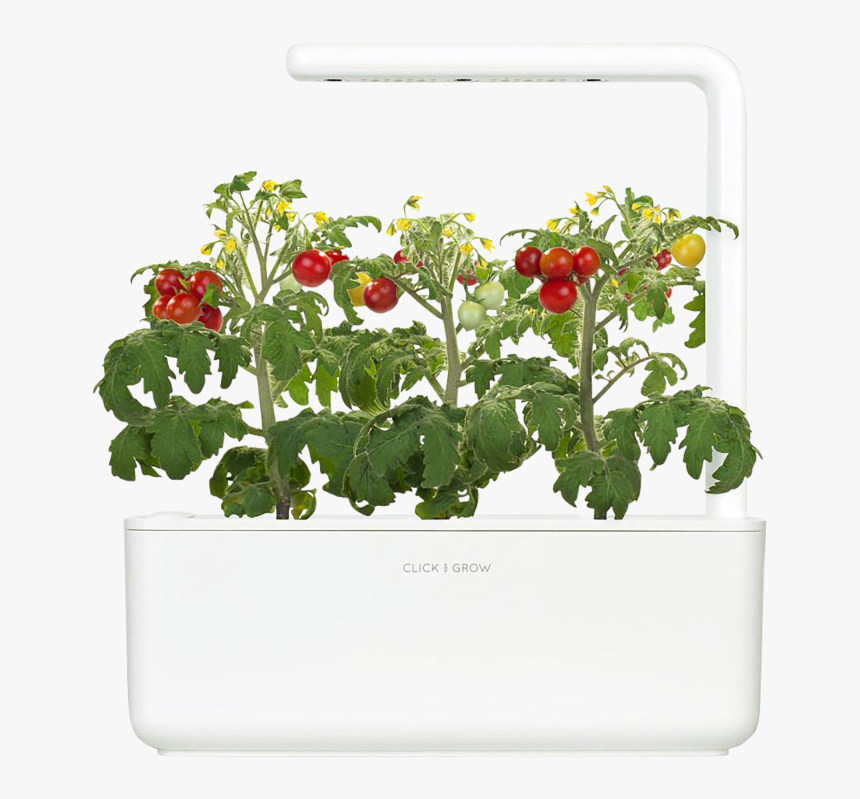 Click And Grow Mini Tomatoes, HD Png Download, Free Download