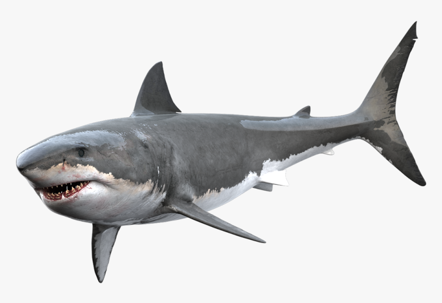 Great White Shark Png Transparent Png Kindpng Shark png, free portable network graphics (png) archive. great white shark png transparent png