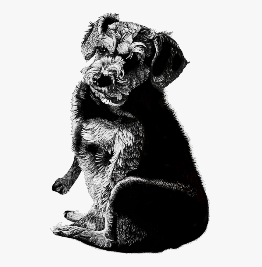 Dog Pen And Ink Portrait, HD Png Download, Free Download