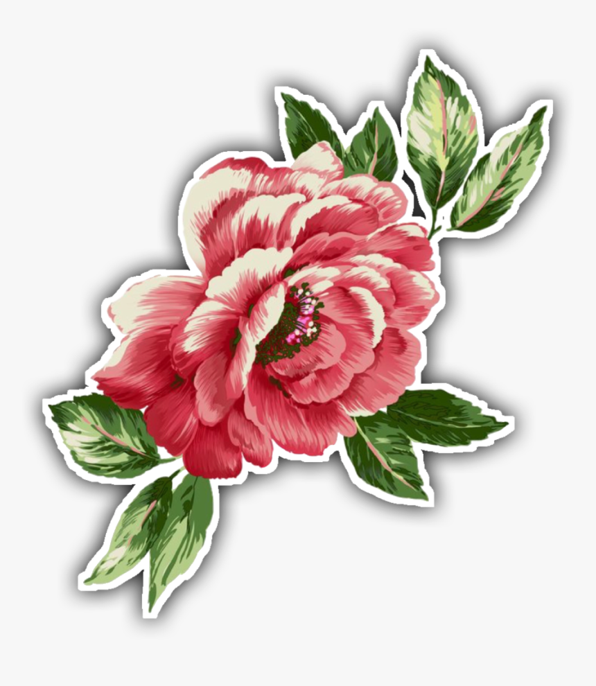Common Peony , Transparent Cartoons - Common Peony, HD Png Download, Free Download