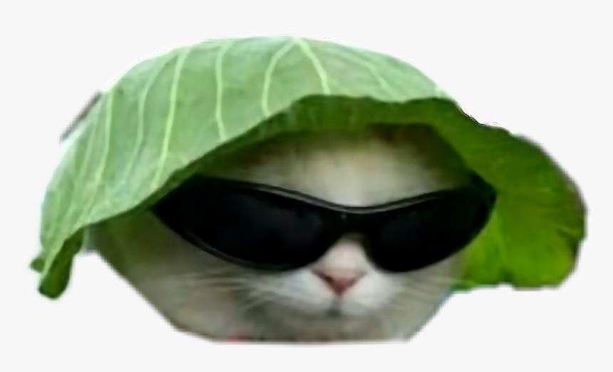 Big Gay Memes Dankmemes Dankmeme Idubbbz Fuckyou Cat With