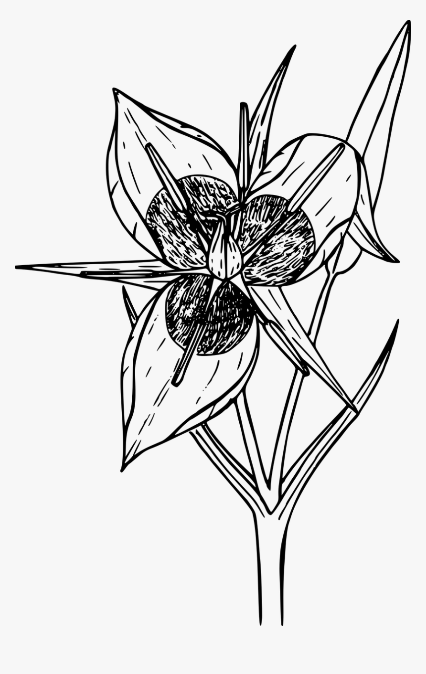 Welcome to Dover Publications   digistamps   Flower coloring pages ...   1360x860