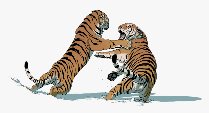 Two Tigers Fighting - Tiger Fight Png, Transparent Png, Free Download