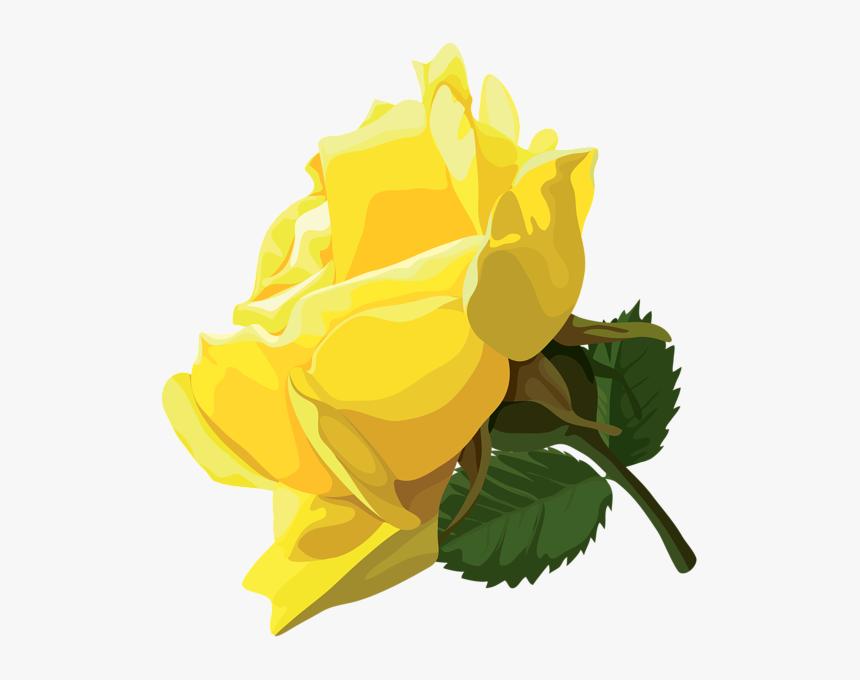 Clip Art Yellow Rose Png Transparent Png Kindpng