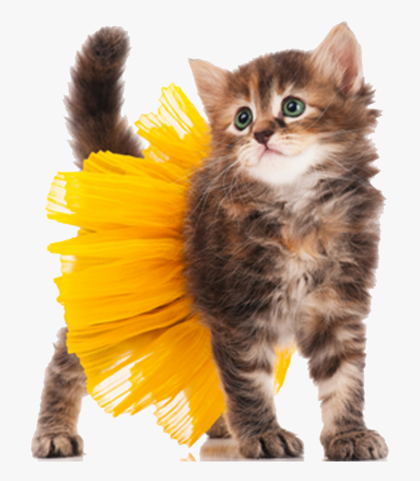 Cat Kitten Dog Costume