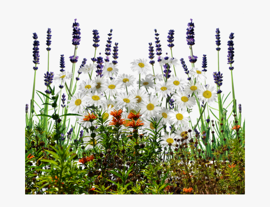 English Wildflowers Cold Crea - Transparent Background Wildflower Transparent, HD Png Download, Free Download