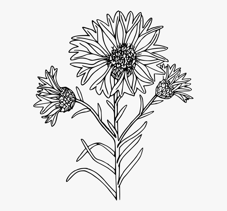Wildflowers Png Black And White - Coloring Page, Transparent Png, Free Download