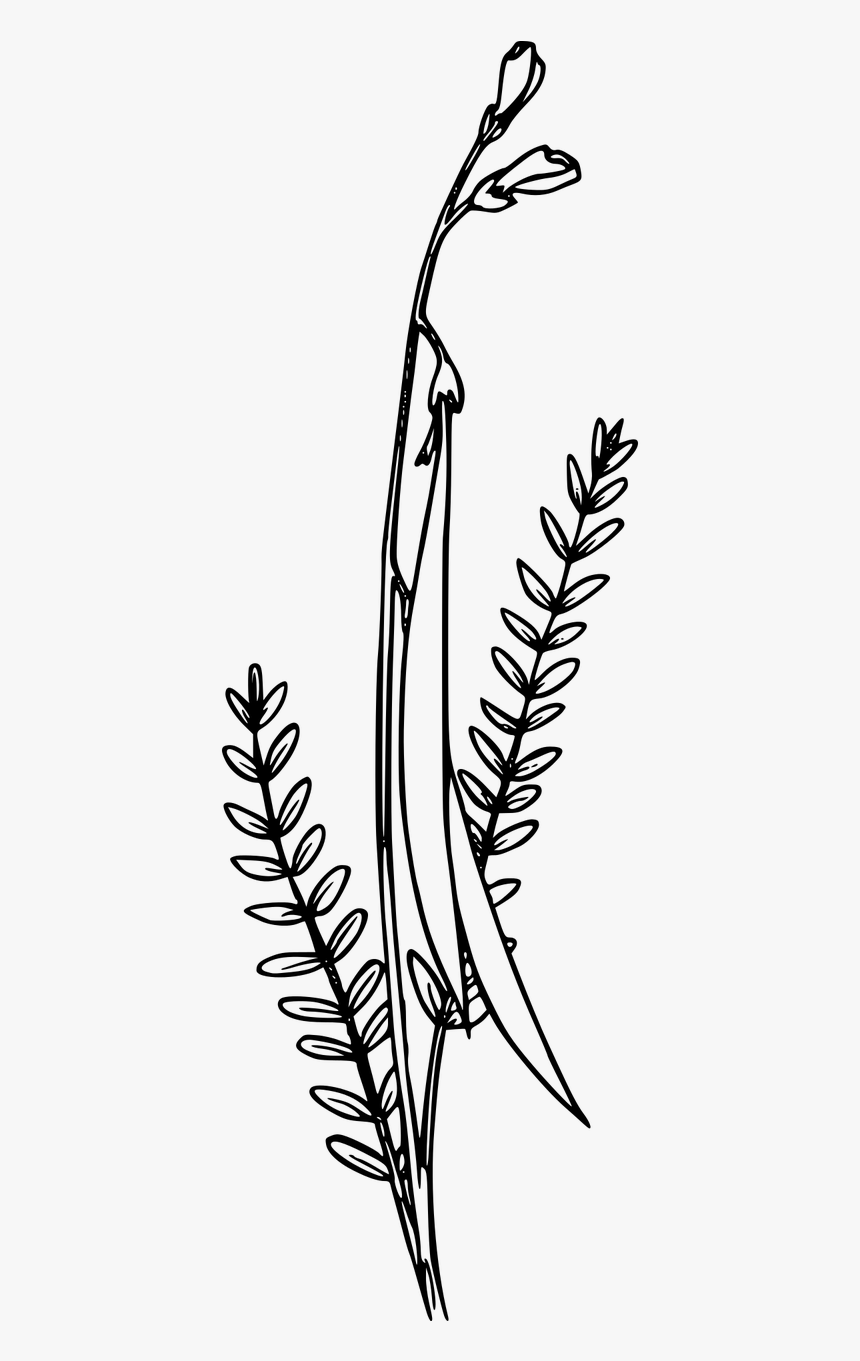 Wildflower Clipart Black And White, HD Png Download, Free Download