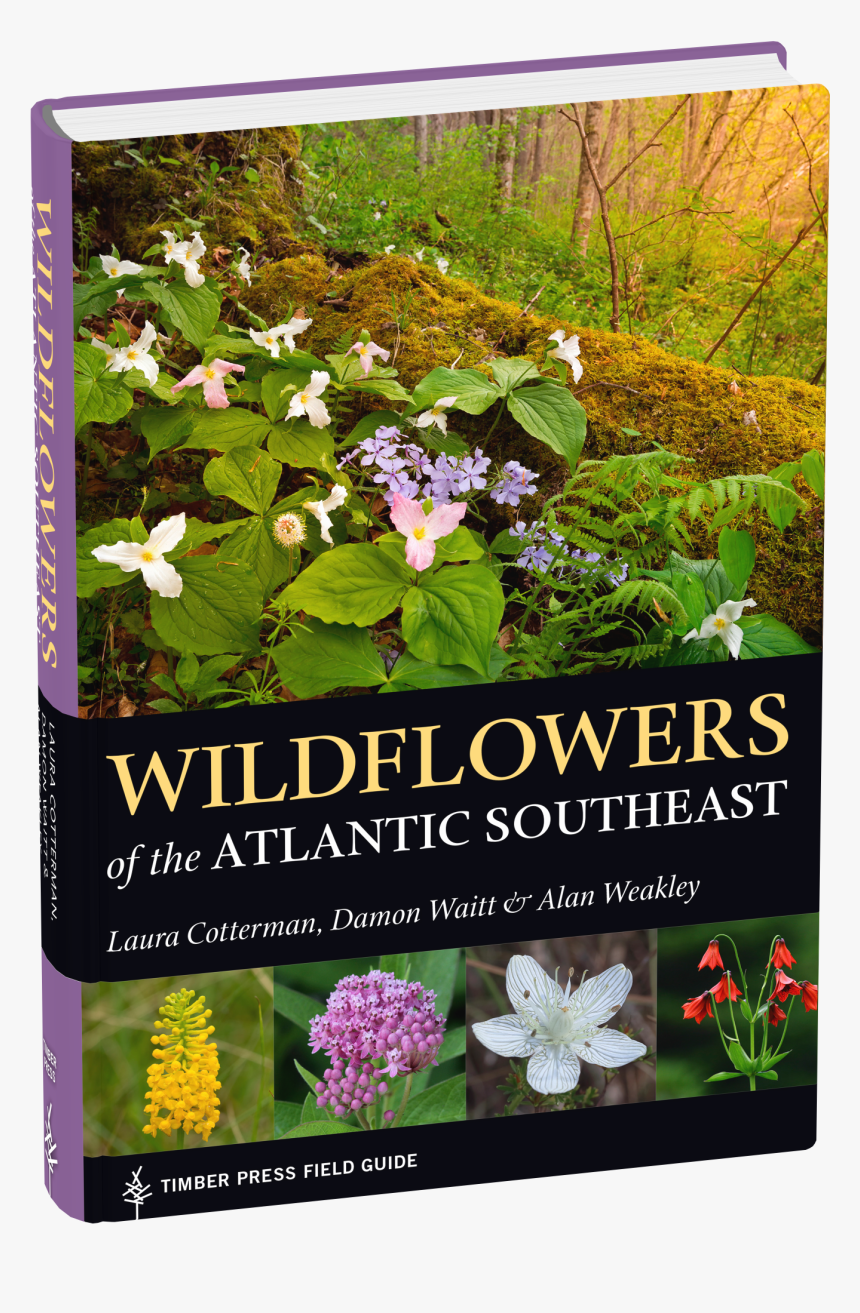 Cover - Wildflowers Of The Atlantic Southeast, HD Png Download, Free Download