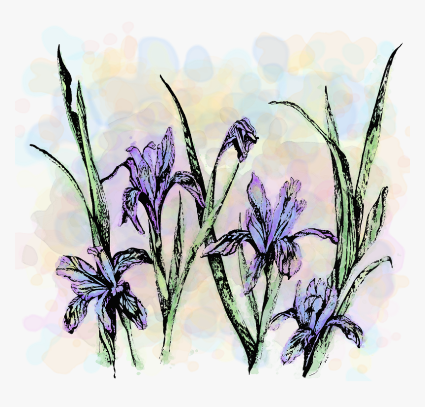 Wildflower Show -1, HD Png Download, Free Download