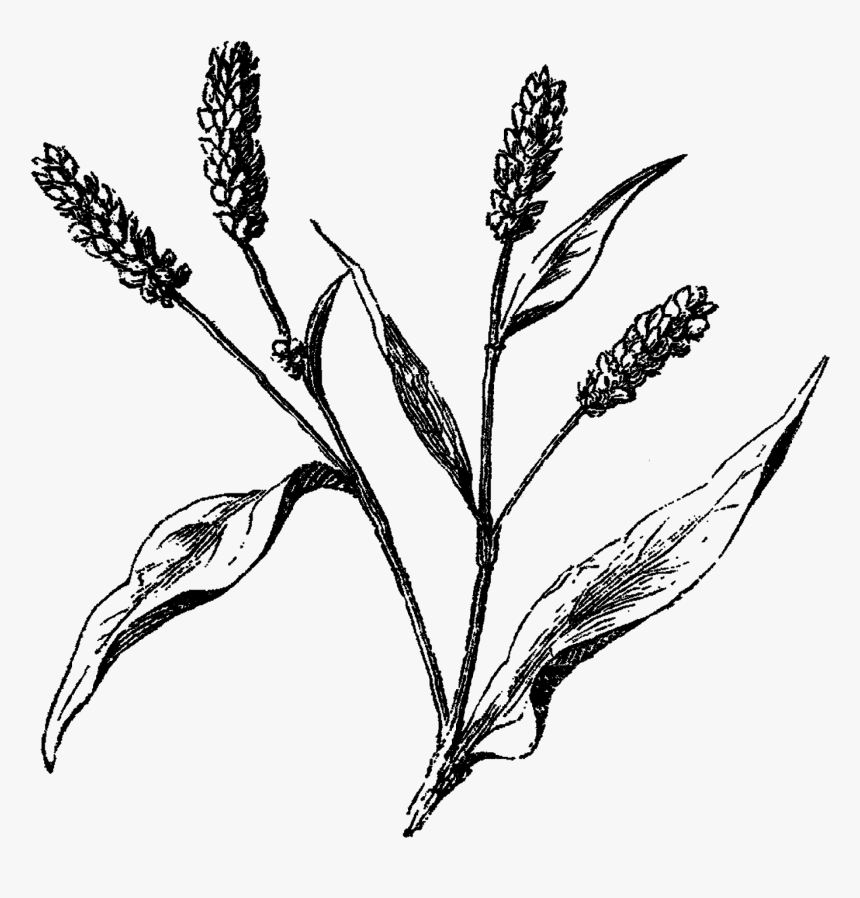 Wildflowers Png, Transparent Png, Free Download