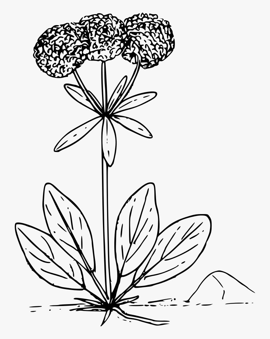 Wildflower Clipart Prairie Flower - Wild Flower Vector Png, Transparent Png, Free Download