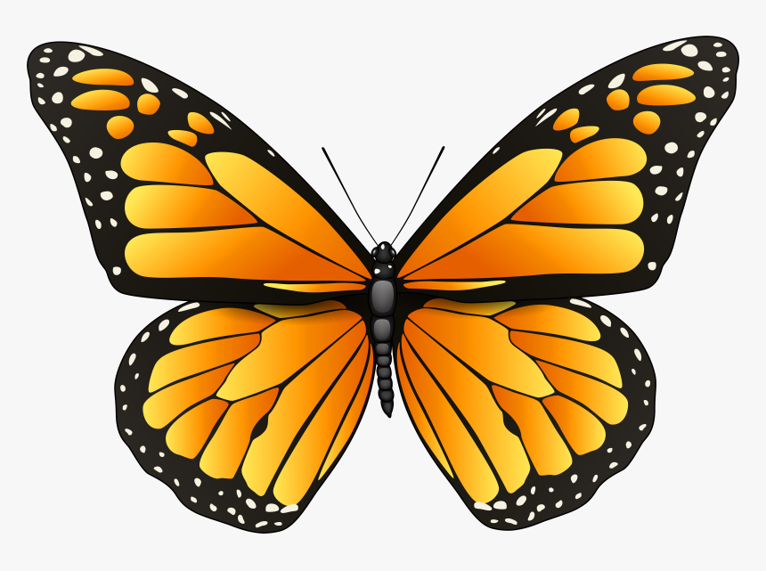 Orange Butterfly Png Clip Art - Butterfly Black And White Png, Transparent Png, Free Download