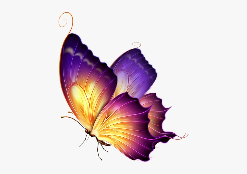 Butterfly Clipart Png Image Free Download Searchpng - Butterfly Png For Editing, Transparent Png, Free Download