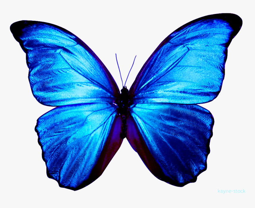 Blue Butterfly Clipart , Png Download - Transparent Background Blue Butterfly Png, Png Download, Free Download