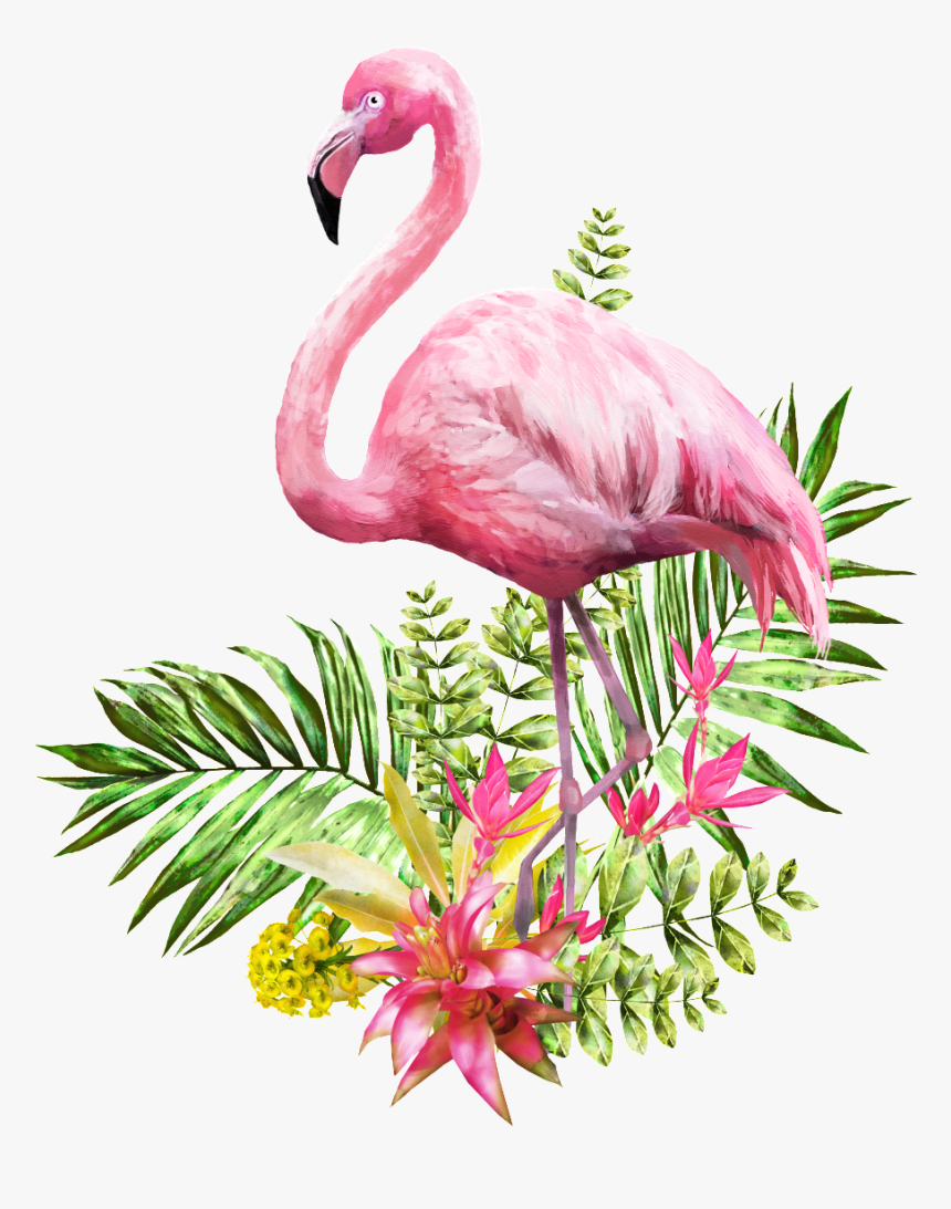 Pin By Diane Matthews On Birds - Png Transparent Flamingo Png, Png Download, Free Download
