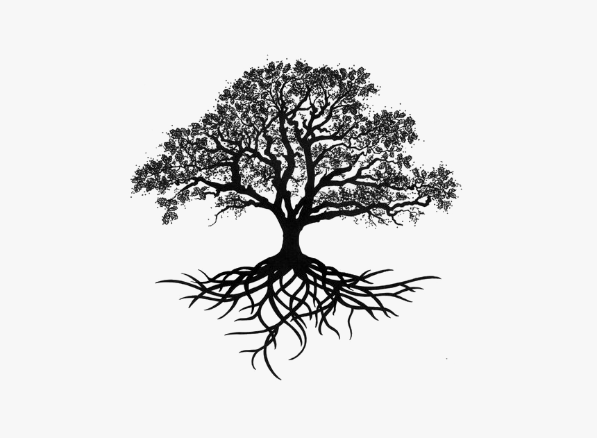 Tree Oak Drawing Silhouette - Tree Of Life With Roots, HD Png Download, Free Download