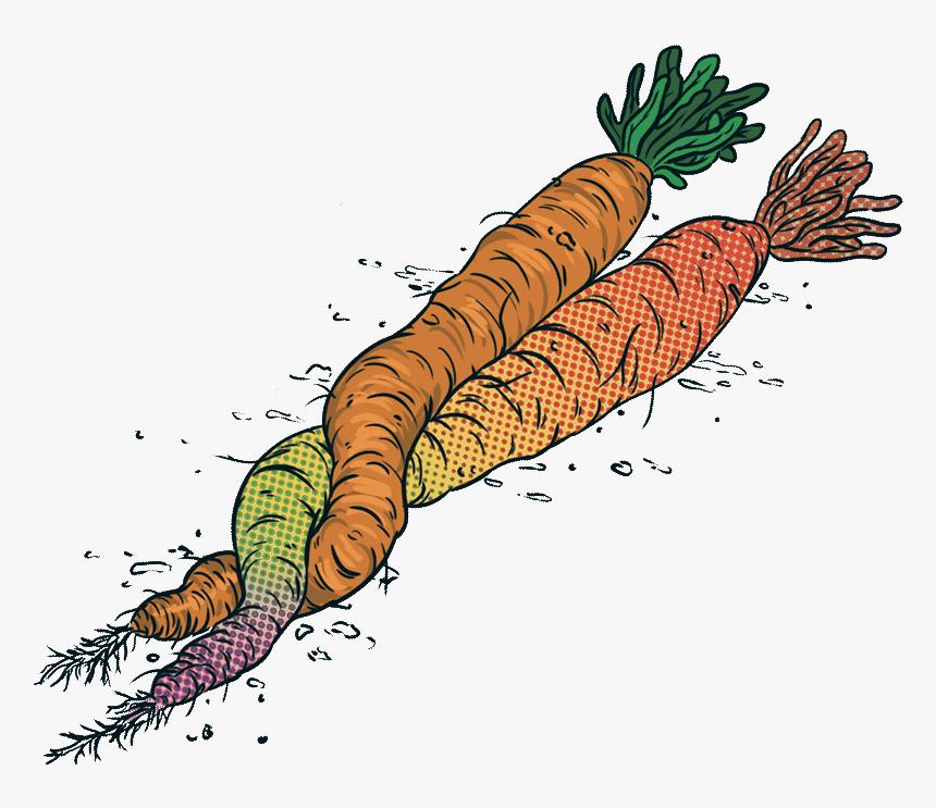 Jarrybriefs Vegan Carrots - Illustration, HD Png Download, Free Download