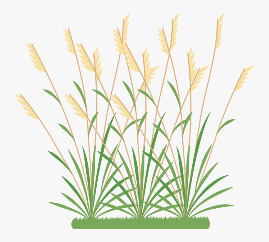 Grass Icon Png, Transparent Png, Free Download