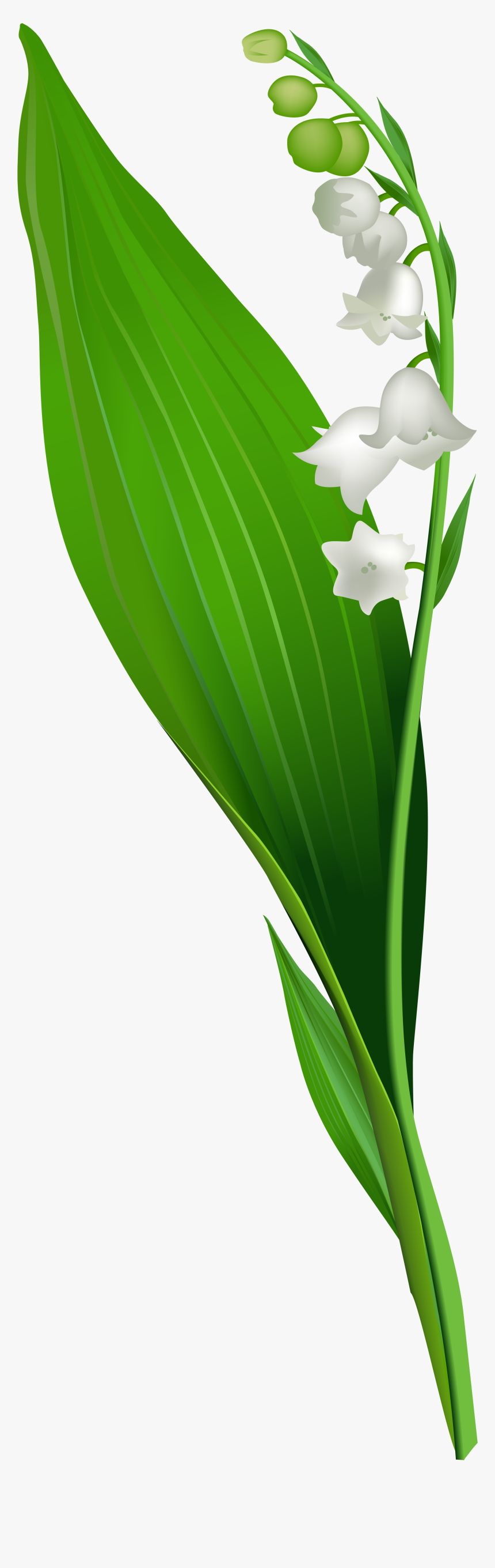 Valley Clipart Transparent - Lily Of The Valley Png, Png Download, Free Download