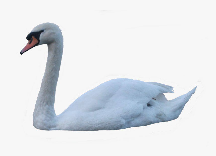 Free Swan Clipart in AI, SVG, EPS or PSD