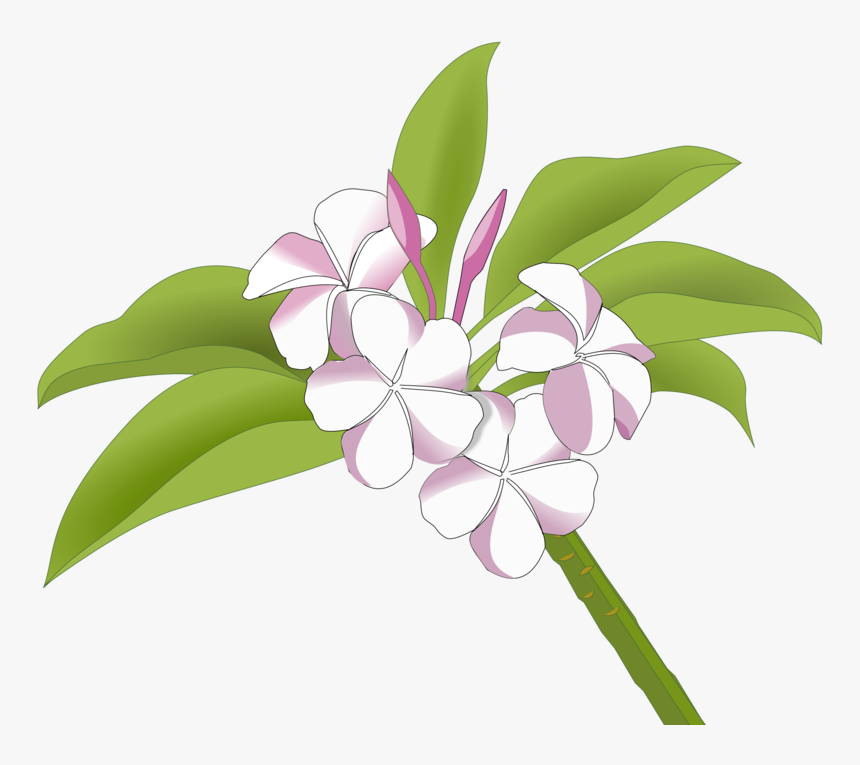 Pink Plant Flora Gambar Bunga Kamboja Png Transparent Png Kindpng